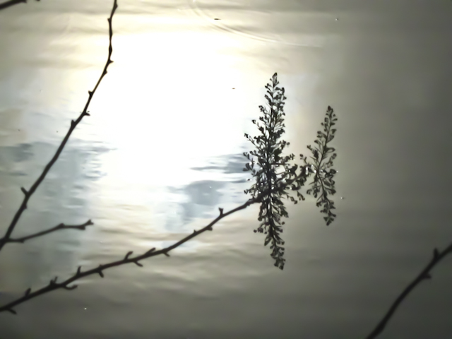 water reflections of plants and sun light in a pond