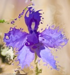 surrealistic indigo flower petals disgregating into pieces