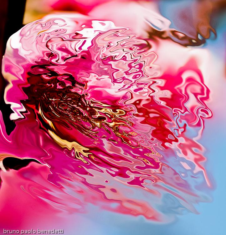 fluid liquid red shape on blue background