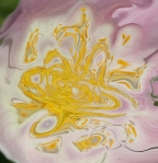 yellow vortex on pink and white shades