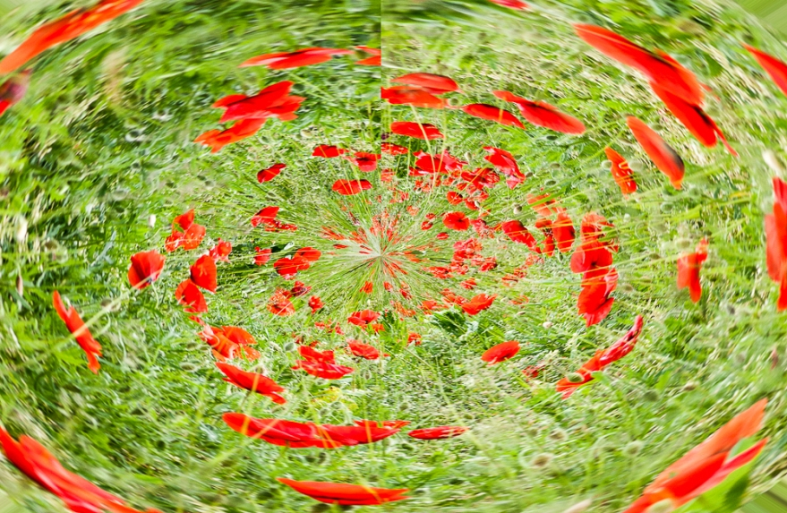 red flowers abstract swirl