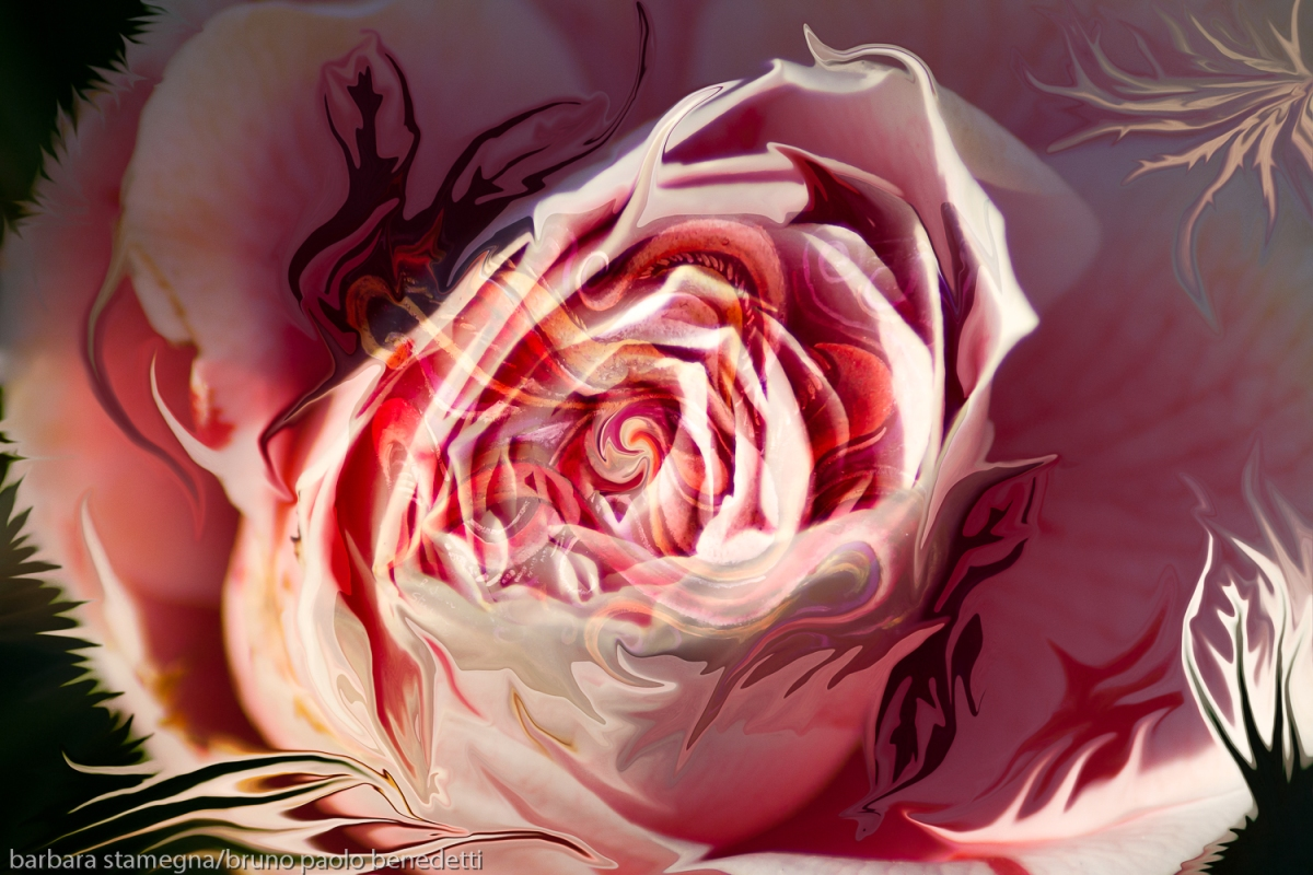 Pink Rose Blossom Abstract Art